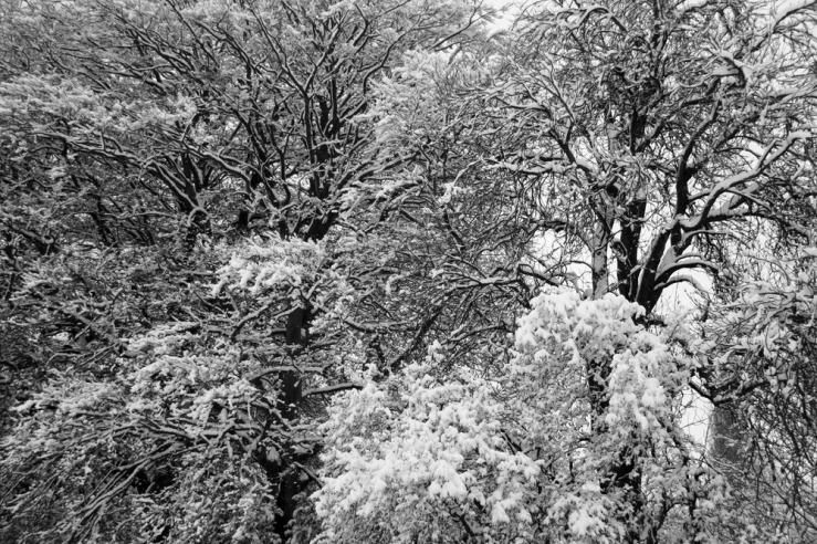 Bepton trees