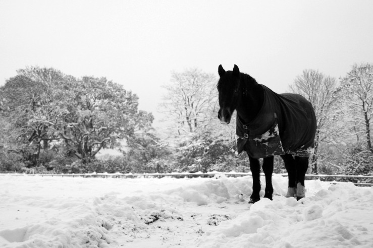 Wendy and Sarah Bepton Horse