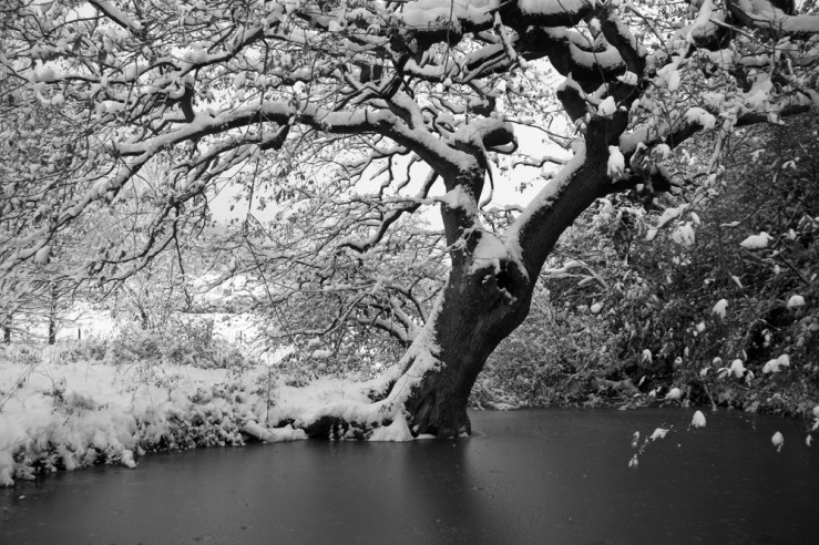 Bepton Church pond