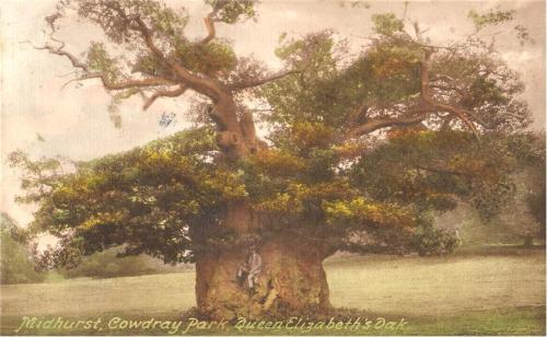 Queen_elizabeth_oak_in_1910