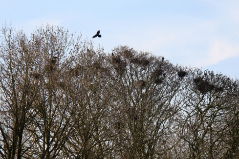 31_rook_nests-scaled1000