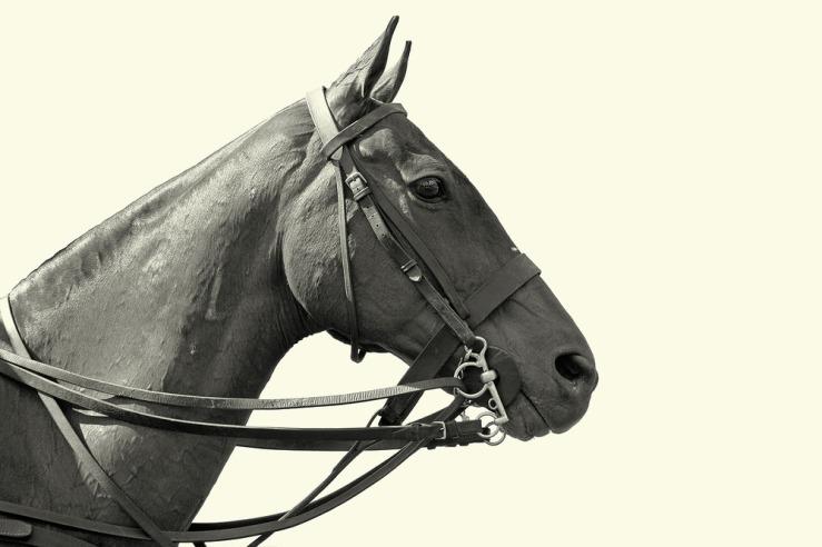 Polo Pony at Cowdray