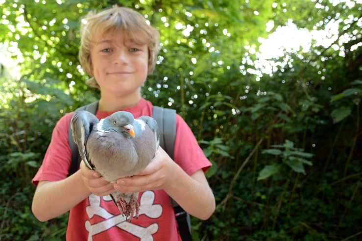 Stuffed-Pigeon-Recipe