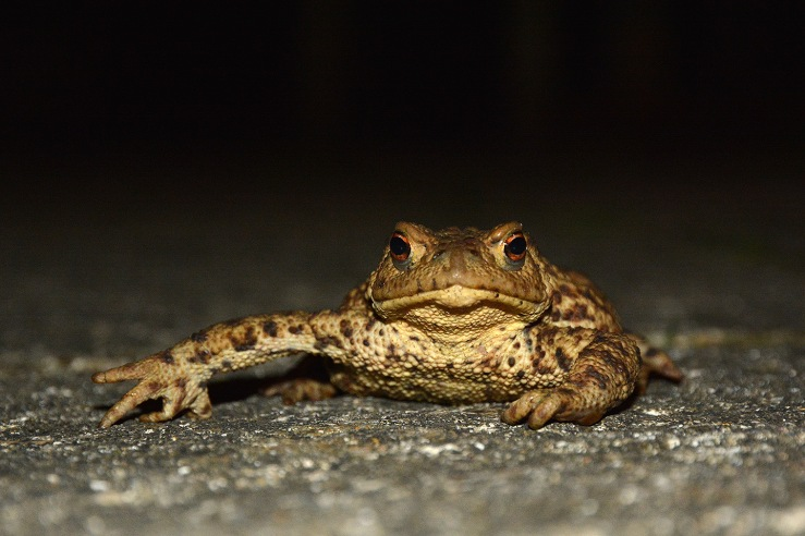 UK Toad Sussex