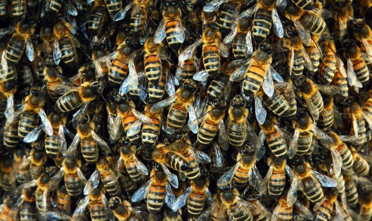 Bee swarm in the garden