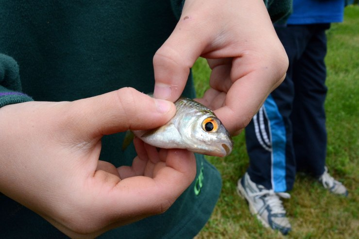 Chiddingfold Cubs Fishing Whithorn Farm 3
