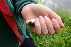 Chiddingfold Cubs Fishing Whithorn Farm 5