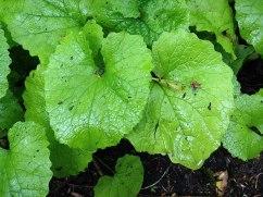 Green weeds
