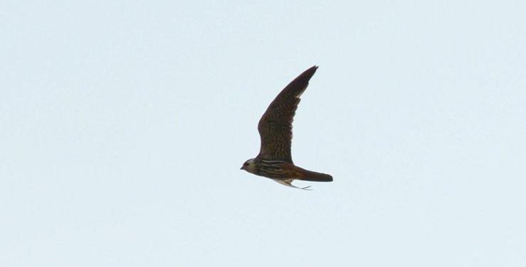 Hobby Falcon UK