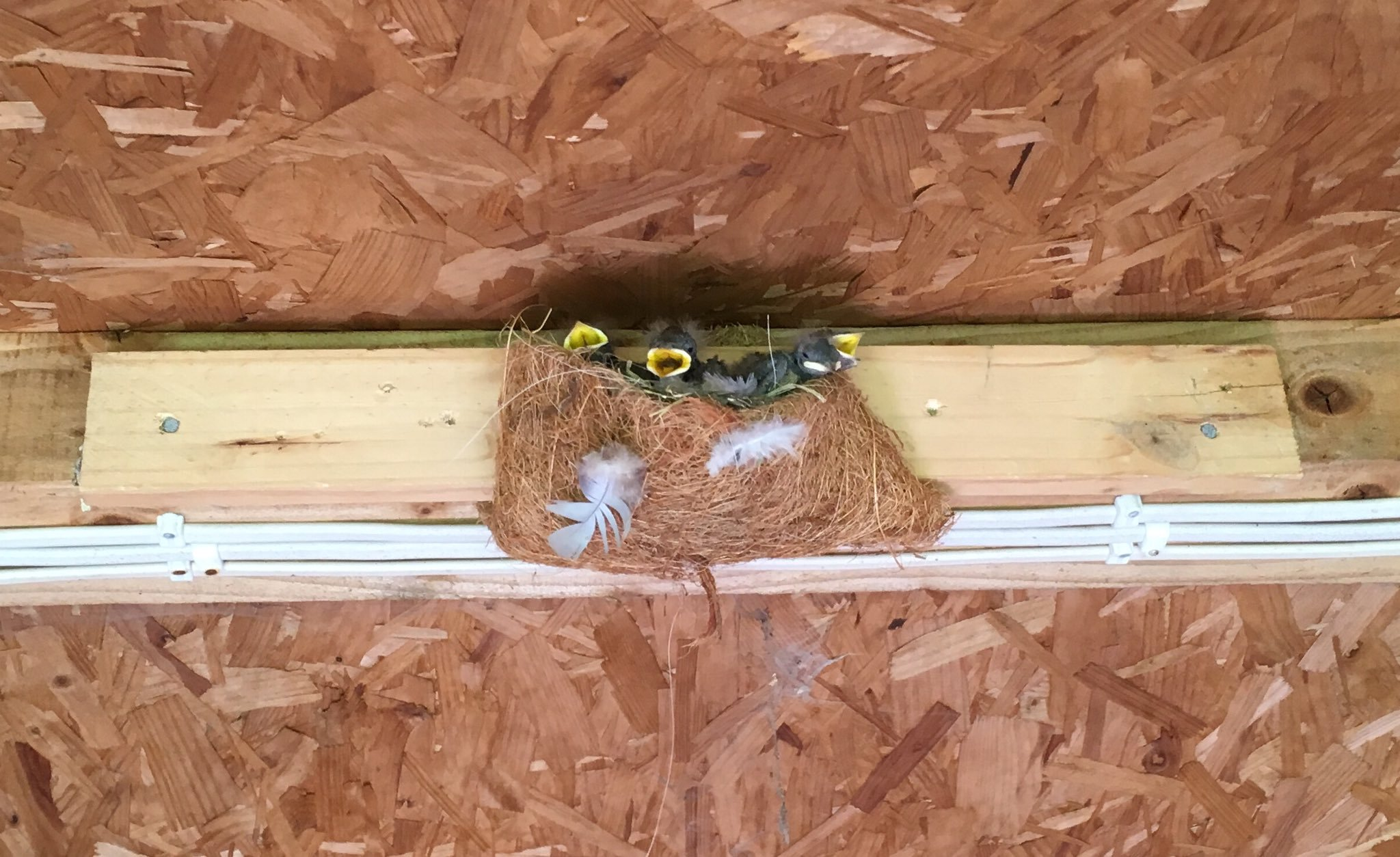 Home made swallow nest box