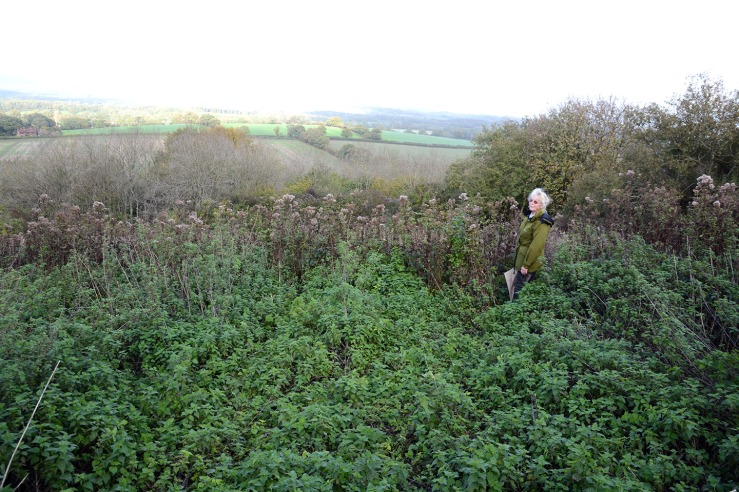 Bepton Down is a Neglected SSSI on the South Downs