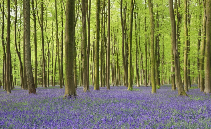 Best Bluebell Woods in West Sussex